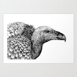 White-backed Vulture Art Print