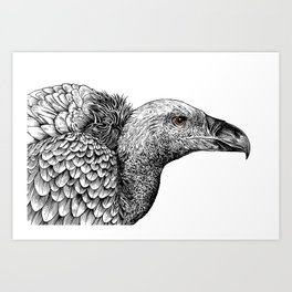 White-backed Vulture Art Print