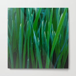Love grass Metal Print
