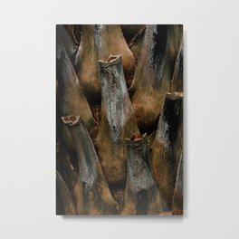 the beauty of trunk palm in botanic nature - Nature & wildlife fine art photo prints  Metal Print