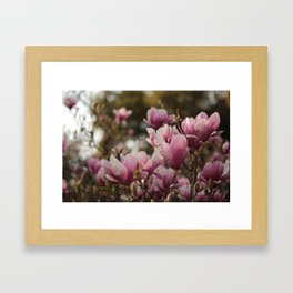 Pretty and sweet pink flowers Framed Art Print