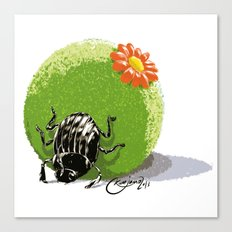 Dung Beetle Canvas Print