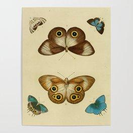 Naturalist Butterflies Poster