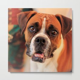 boxer's face weeping of friendly behavior Metal Print