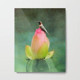 Hummingbird and the Lotus Metal Print