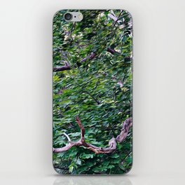 An Old Branch iPhone Skin