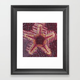 Sea Star Framed Art Print