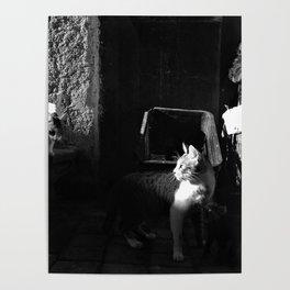 Les chats de Rabat half light Poster