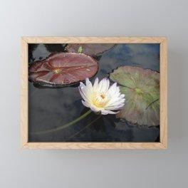 White Lily in Pond Framed Mini Art Print