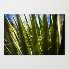 palms. Canvas Print