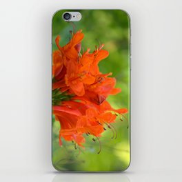 Exotic Ginger Flower Bignone 9125 iPhone Skin