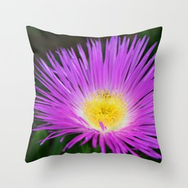 Ice Ice Baby - Flower Photography by Sharon Cummings Throw Pillow