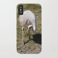 ostrich iPhone & iPod Cases featuring Ostrich by Sarah Shanely Photography