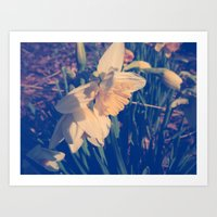 rileigh smirl Art Prints featuring Daffodil by Rileigh Smirl