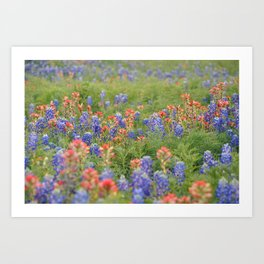 Spring Wildflowers Sunset Silhouetted Art Print
