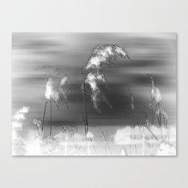 Windblown Reeds Canvas Print