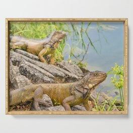 Iguanas at Shore of River Serving Tray