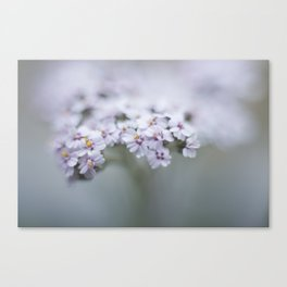 Grey Toned Blooms Canvas Print