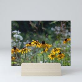 Group of black eye susan flowers Mini Art Print