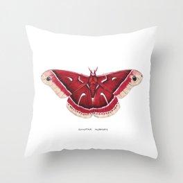 Ceanothus Silkmoth (Hyalophora euryalus) Throw Pillow