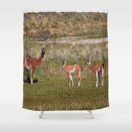 Guanaco family Shower Curtain