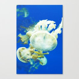 Blue Jellyfish Under the Sea Underwater Photography Saturated Pop Art Color Wall Art Canvas Print