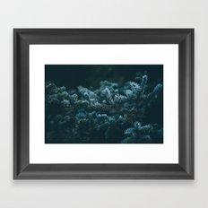 evergreen .  Framed Art Print