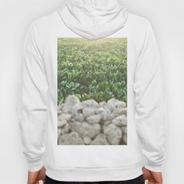 Nature photography, home furnishings, fine art, kitchen wall decor, South Italy, Sicily, Apulia, Hoody