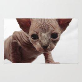 Freaky Cute Furless Sphynx Kitten Rug