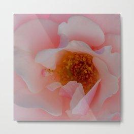 Rose Garden Two Metal Print