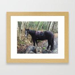 Horse Near Matheson Lake No. 1 Framed Art Print