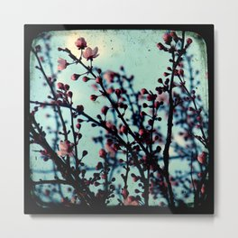 Spring Blossoms - Through The Viewfinder (TTV) Metal Print