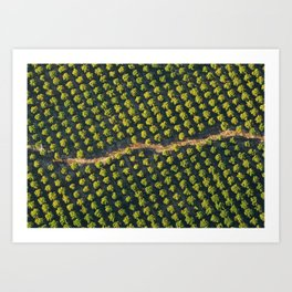 In a Row Art Print