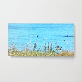Whale chasing ducks close to shore Metal Print