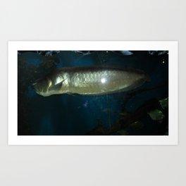 acvarium - silver fish Art Print