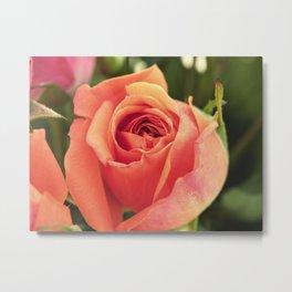 Vintage Rose 4  Metal Print