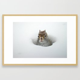 Pop-up Squirrel in the Snow Framed Art Print