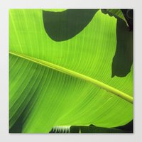 banana leaf Canvas Prints featuring Banana Leaf, Dark Shadows by Glenn Designs