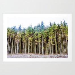 Welsh Forest Art Print