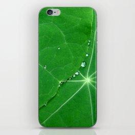Nasturtium Dew iPhone Skin