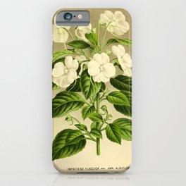 Flower impatiens flaccida10 iPhone Case
