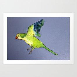 Monk Parakeet in Flight Art Print