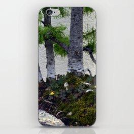 Shamrocks iPhone Skin