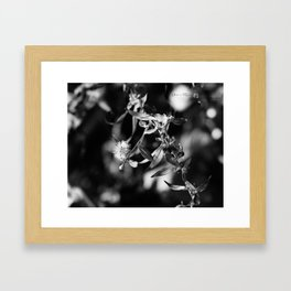 Expressions in Black & White ~ Series I Framed Art Print
