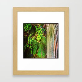 Ripening on the Arbor Framed Art Print