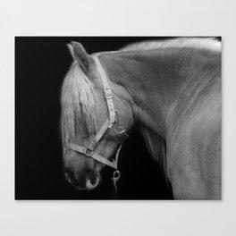 Work Horse Canvas Print