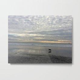 Happy Dog @Muir Beach Metal Print