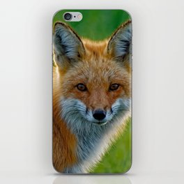 Red Fox Backlit iPhone Skin