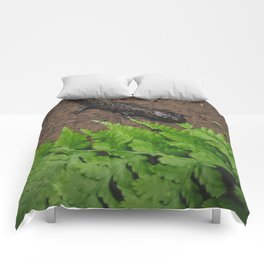 Salamander Comforters