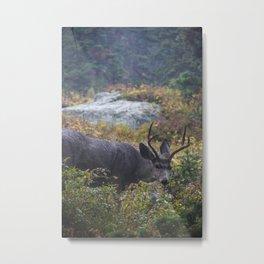 Deer in the Lense Metal Print